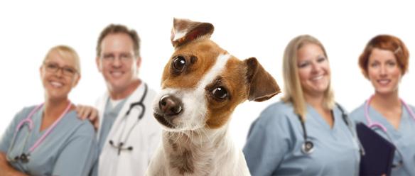 獣医師から聞いた、私たちが知らない動物病院とペット保険の関係