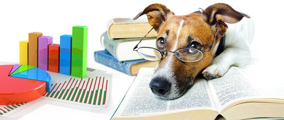 主要な補償内容 – ペット保険を徹底比較 vol. 2