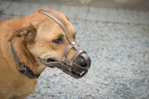 犬の噛みつき賠償で1700万円!?ペット保険の「賠償責任特約」の必要性と確認ポイント